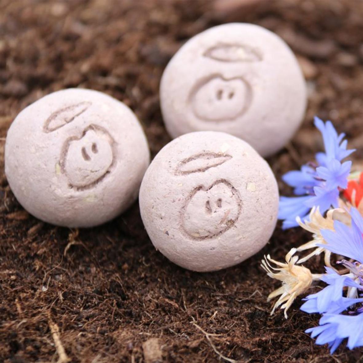 seedball_fleur